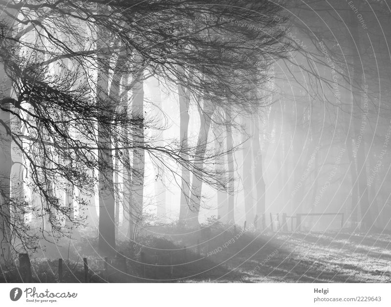 Cold winter morning Environment Nature Landscape Winter Fog Ice Frost Plant Tree Grass Meadow Forest Illuminate Stand Growth Esthetic Exceptional Natural Gray