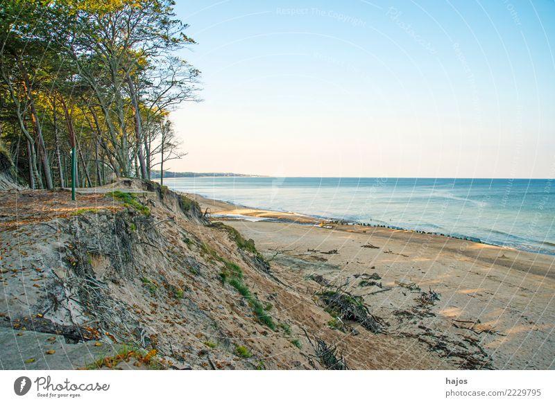 Baltic Sea beach in Orzechowo, Poland Leisure and hobbies Vacation & Travel Summer Beach Ocean Clouds Tree Reef Wild Blue Loneliness Idyll Sandy beach dunes