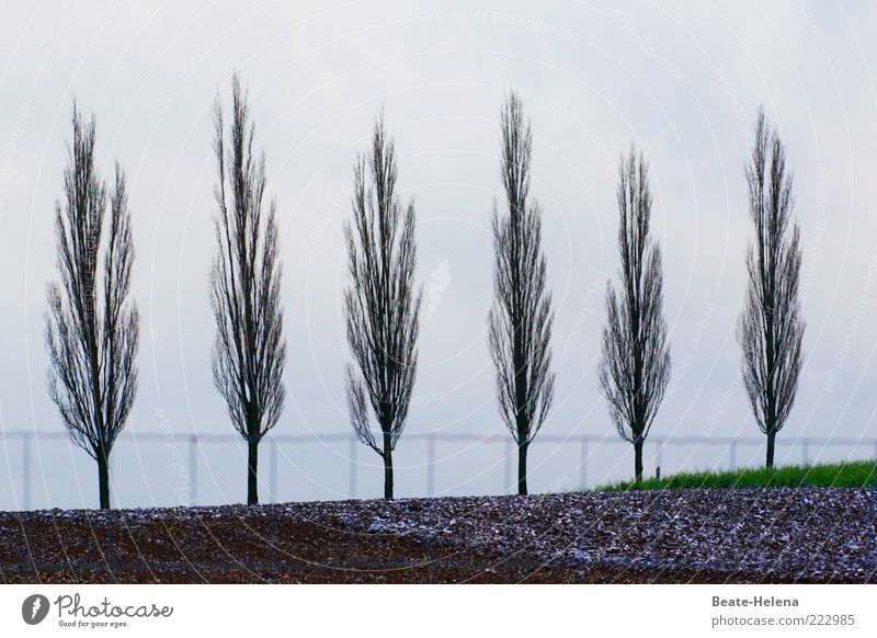 Nature Tree Green Beautiful Plant Vacation & Travel Gray Landscape Trip Arrangement Tall Esthetic Simple Peace Harmonious Equal