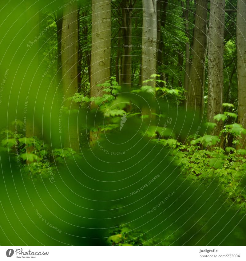 forest Environment Nature Plant Tree Forest Growth Natural Green Beech wood Tree trunk Leaf green Colour photo Exterior shot Deserted Day Blur Concealed