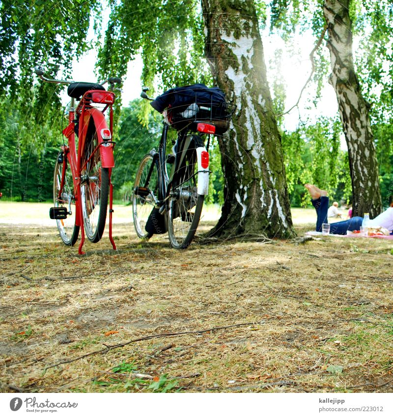 Woman Human being Tree Sun Summer Vacation & Travel Relaxation Berlin Meadow Grass Park Legs Bicycle Weather Adults Trip