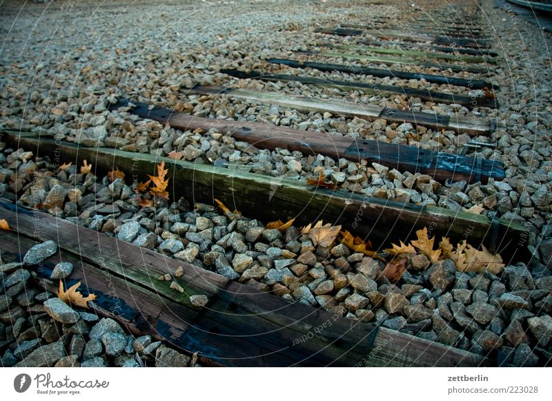 Nature Old Loneliness Autumn Wood Landscape Environment Earth Transport Railroad tracks Traffic infrastructure Gravel Dismantling Stone Joist Shut down