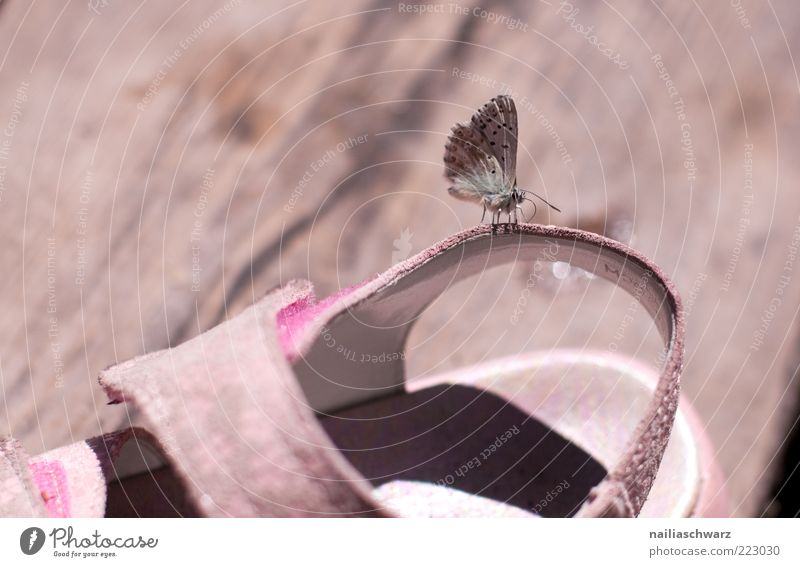 Nature Summer Animal Wood Gray Environment Footwear Brown Small Pink Sit Wing Butterfly Wild animal Crawl Sandal