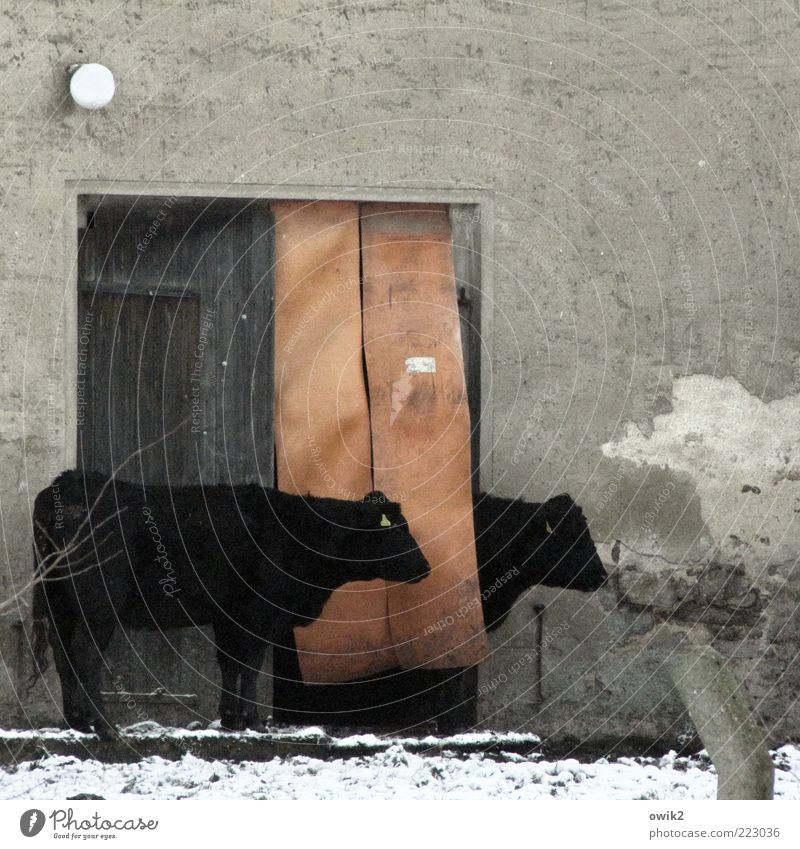 Winter Animal Black Calm Life Snow Wall (building) Gray Wall (barrier) Lamp Door Together Contentment Facade Wait Pair of animals