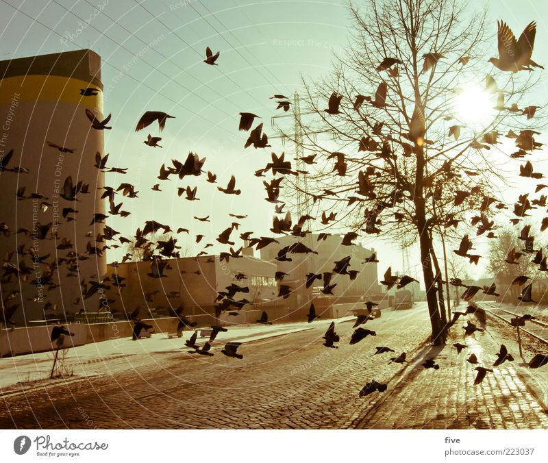 Hamburg City Birds Nature Sky Winter Plant Tree Town Port City Outskirts Industrial plant Factory Manmade structures Building Animal Pigeon Group of animals