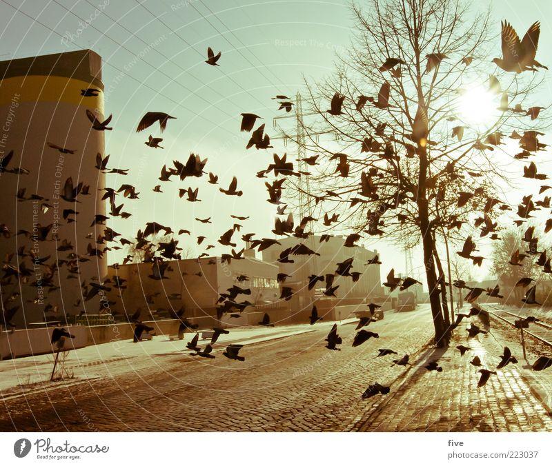 Sky Nature Tree City Plant Winter Animal Cold Building Moody Bird Fog Flying Hamburg Fresh Factory