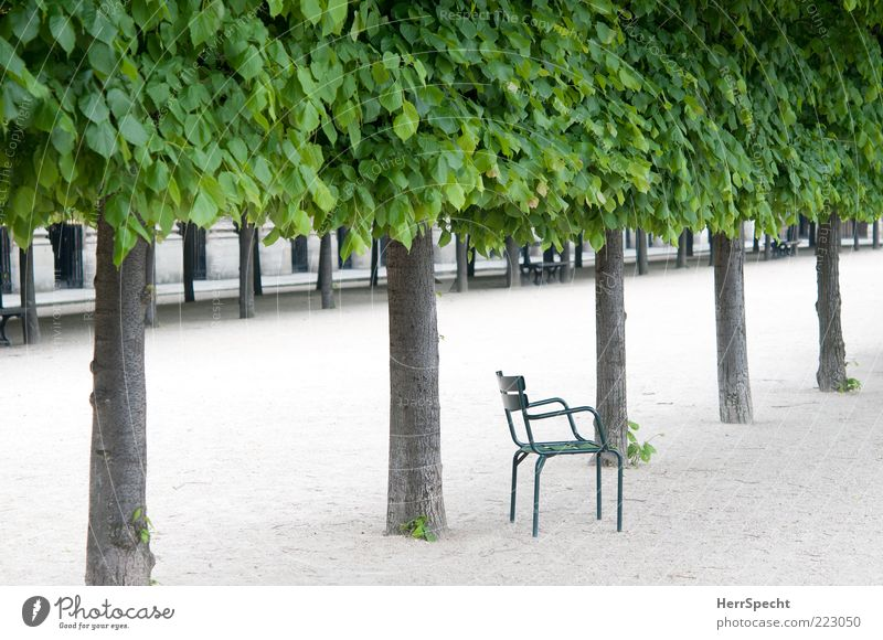 Green Plant Summer Leaf Loneliness Wood Gray Sadness Park Metal Wait Contentment Esthetic Grief Chair Infinity