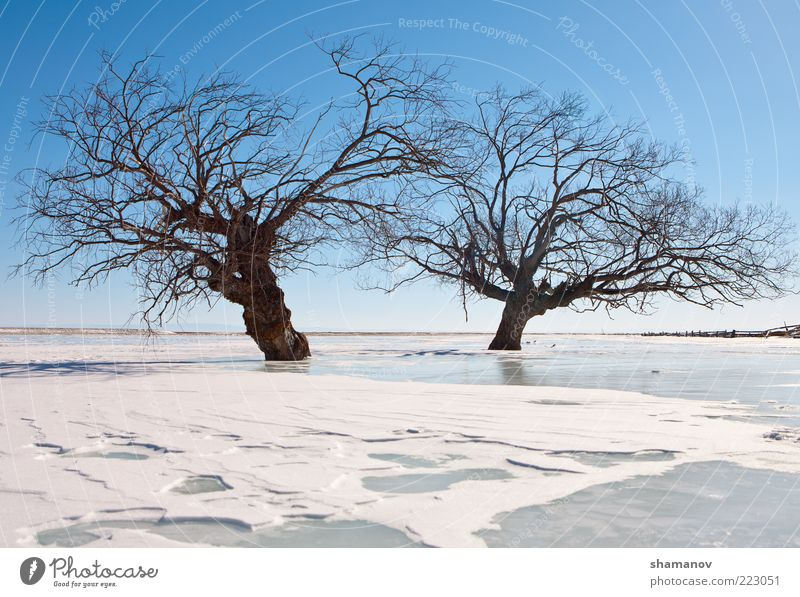 trees in an ice of lake Winter Snow Mountain Nature Landscape Sky Ice Frost Tree Coast Lake Together Blue White Baikal Siberia calm cold Fence flood light