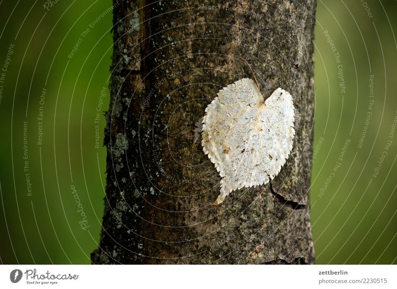 Opportunistic Heart Branch Tree Tree trunk Leaf Twig Heart-shaped Romance Park Forest Green Nature