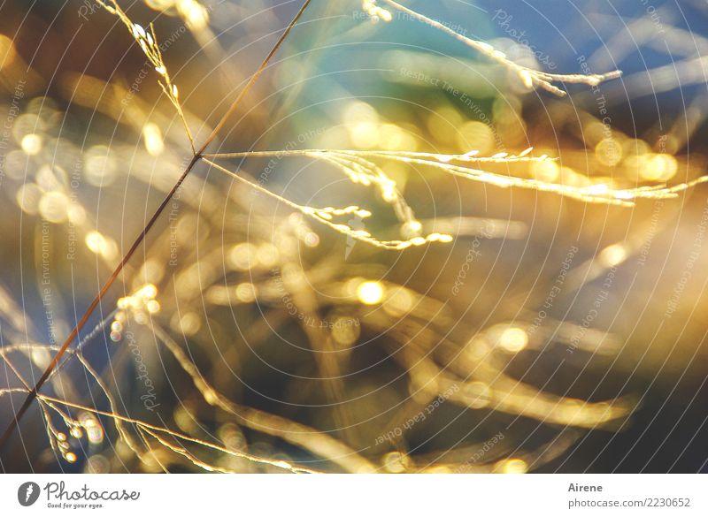 Nature Plant Sun Warmth Yellow Meadow Grass Happy Orange Bright Illuminate Glittering Gold Beautiful weather Grain Blade of grass