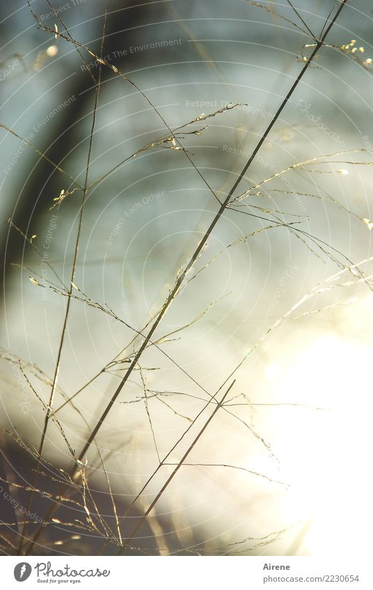 Nature Plant Sun Winter Meadow Natural Grass Small Moody Illuminate Elegant Growth Delicate Dry Trust Thin