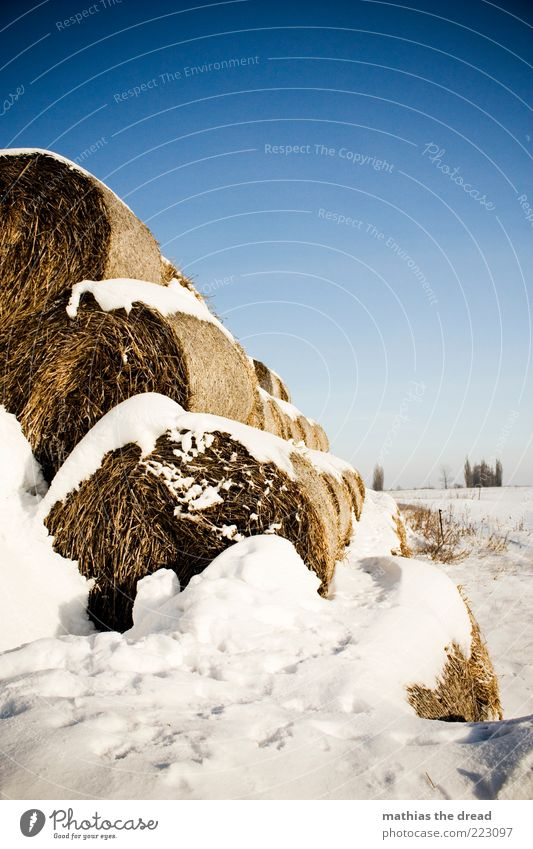 winter Environment Nature Landscape Sky Cloudless sky Horizon Winter Climate Beautiful weather Ice Frost Snow Plant Tree Bushes Meadow Field Cool (slang) Cold