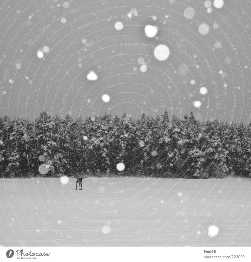 silent Winter Snow Landscape Snowfall Tree Field Forest Deserted Breathe Movement To enjoy Dark Cold Natural Black White Emotions Enthusiasm Longing Relaxation