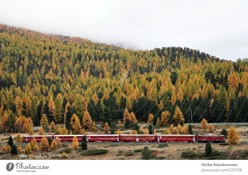 Tree Red Far-off places Forest Autumn Mountain Landscape Transport Railroad Logistics Switzerland Alps Railroad tracks Express train Passenger traffic Pass
