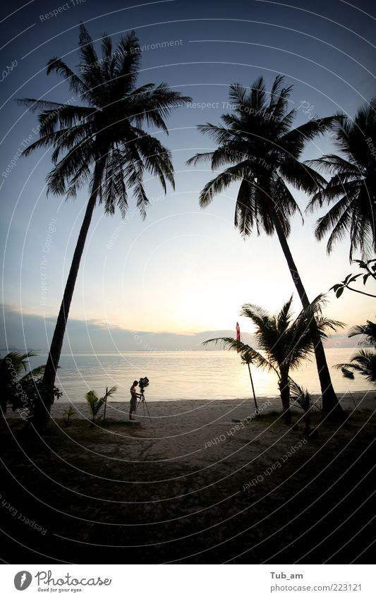 The Director Vacation & Travel Beach Art Landscape Sunrise Sunset Tree Coconut palm Coconut tree Ocean Peaceful Purity pangan phi samui Thailand ko Palm tree