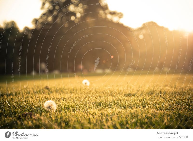 autumn meadow Nature Landscape Sunrise Sunset Autumn Beautiful weather Flower Grass Dandelion Park Meadow Dresden Tourist Attraction large garden Lens flare
