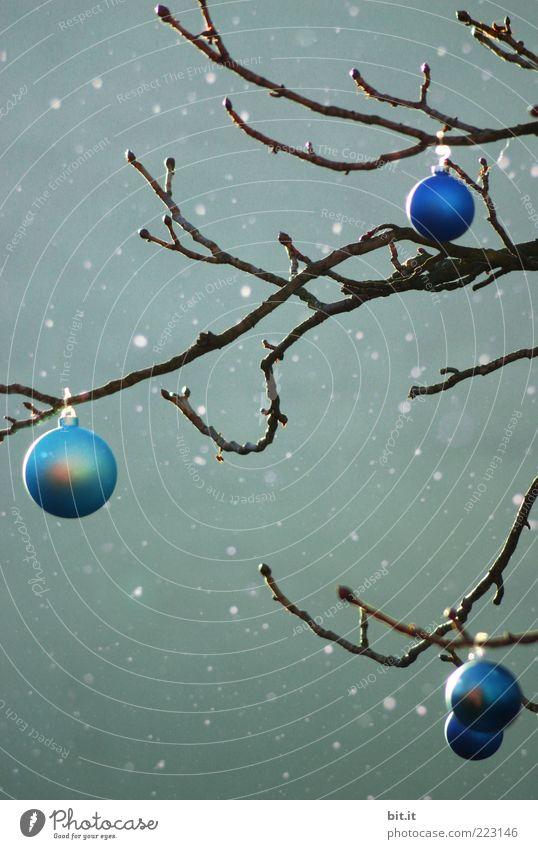 Christmas & Advent Tree Green Blue Winter Dark Cold Snow Snowfall Moody Ice Crazy Frost Kitsch Christmas tree