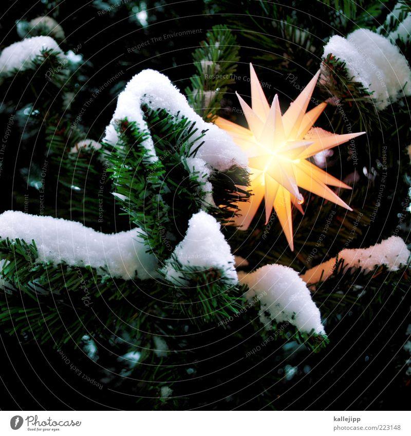 seasonal goods Sign Illuminate Fir tree Christmas tree Stars Christmas decoration Christianity Christmas star Snow layer Christmas & Advent Virgin snow White