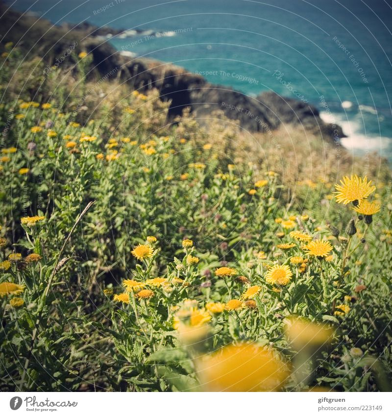 Nature Water Plant Flower Summer Ocean Leaf Yellow Meadow Blossom Landscape Environment Coast Waves Rock Growth