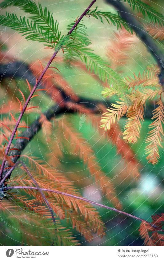Nature Tree Green Environment Brown Change Transience Dry Twig Shriveled Coniferous trees To dry up Fir needle