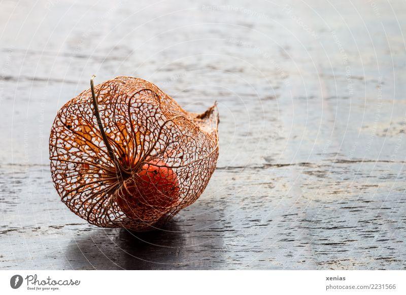 filigree shell Autumn Blossom Physalis Chinese lantern flower Wood Brown Orange Transience Fruit fruit husk Sensitive Delicate Wood grain Physalis alkekengi