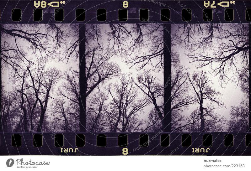 Sky Nature Tree Plant Animal Forest Dark Above Environment Rain Ice Fear Art Fog Crazy Lifestyle