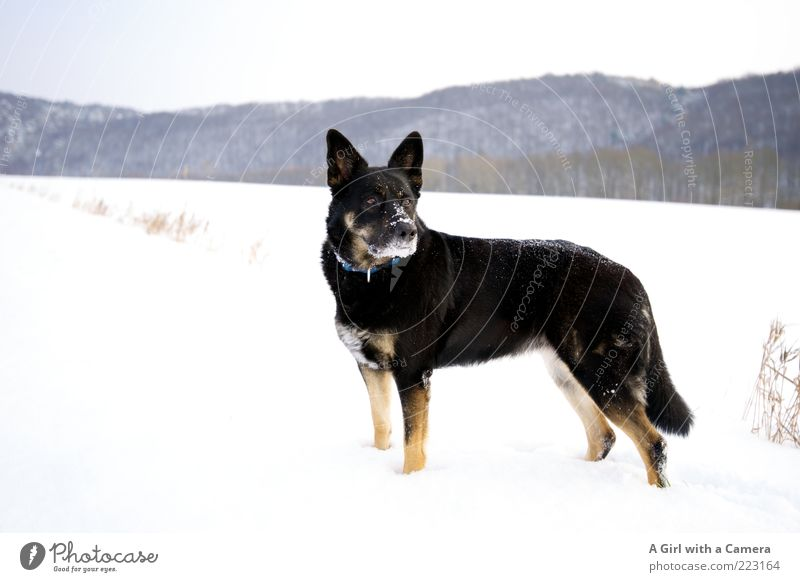 Dog Nature White Animal Winter Clouds Black Far-off places Environment Landscape Snow Playing Ice Power Elegant Might