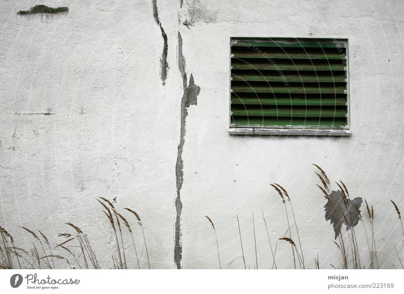 On summer days | Vanishing into the snow field Wall (barrier) Wall (building) Facade Window Old Idyll Nature Decline Time Destruction Green White Plaster