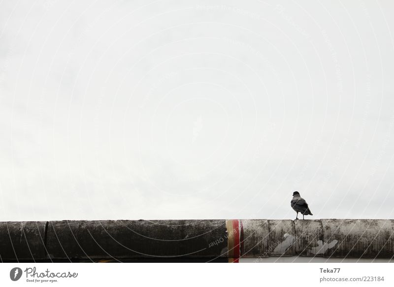 Calm Loneliness Wall (building) Emotions Stone Wall (barrier) Art Bird Sit Concrete Longing Monument Landmark Tourist Attraction Capital city