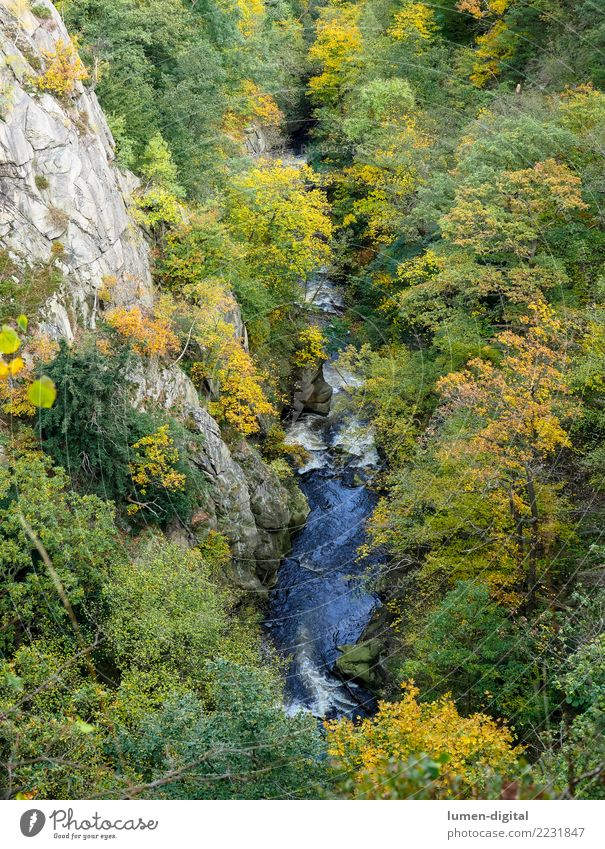 Bodetal in the Harz Mountains Vacation & Travel Tourism Nature Landscape Water Autumn Rock Canyon River Tall Relaxation Environment Rosstrappe Autumn leaves