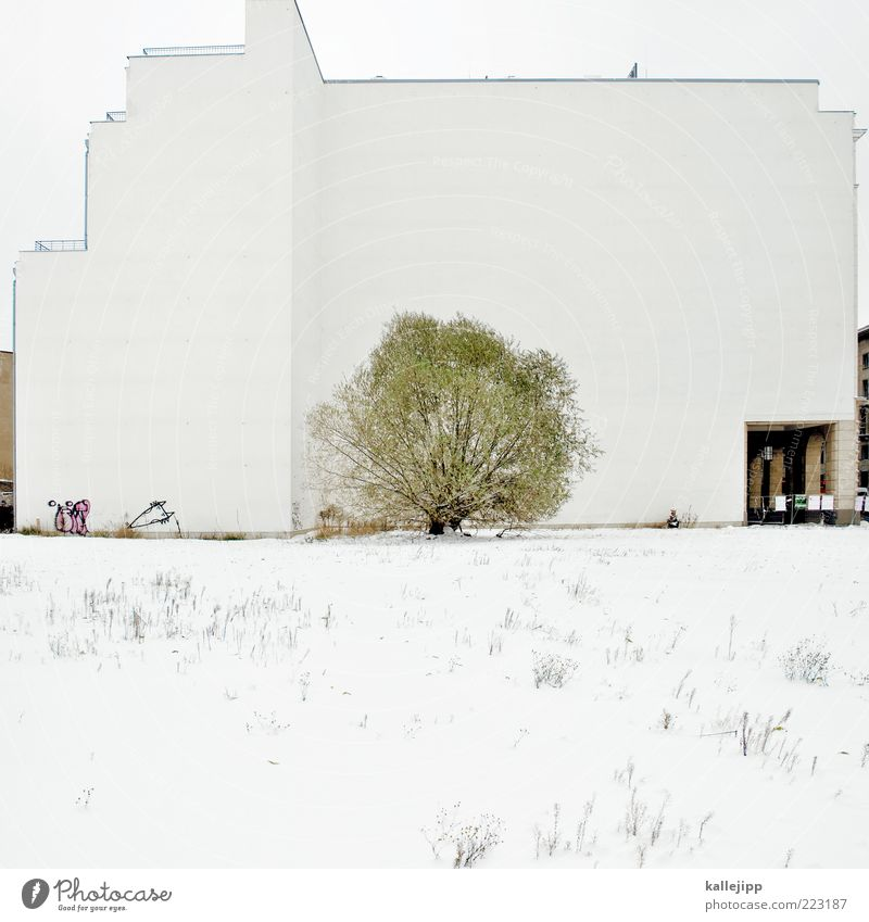White Tree Winter Meadow Snow Architecture Building Weather Ice Facade Places Bushes Frost Blade of grass Sharp-edged