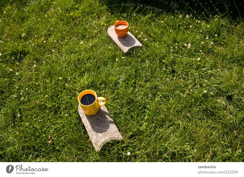 One coffee black, one coffee with milk Drinking Hot drink Coffee Cup Summer Plant Grass Garden Park Meadow Free Friendliness Delicious June Picnic Afternoon