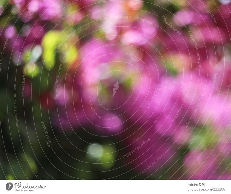 A holiday crop. Esthetic Kitsch Whimsical Bougainvillea Mediterranean Pink Rose glasses Decent Beautiful Nature Flower Hedge Blossoming Blur Green Point