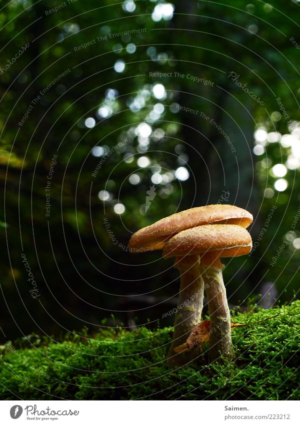 halli-ass Environment Nature Autumn Beautiful weather Moss Forest Small Delicious Natural Round Juicy Brown Green To enjoy Protection Growth Mushroom