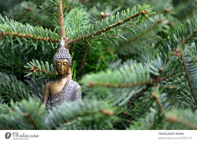 Blue Green Relaxation Calm Forest Love Happy Illuminate Dream Gold Sit Smiling To enjoy Simple Safety Belief