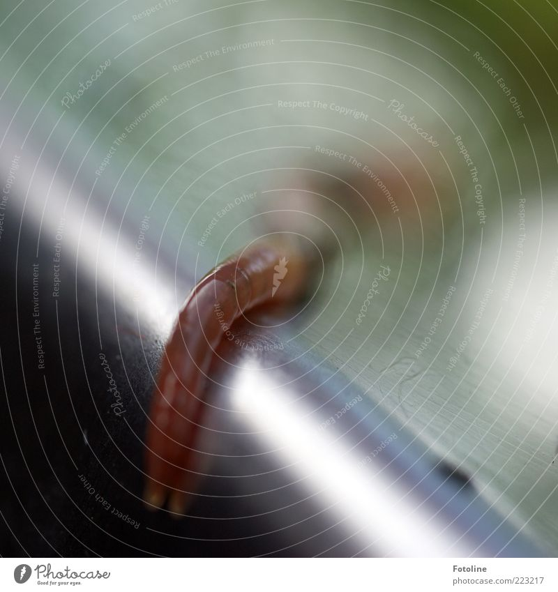 Nature Animal Environment Metal Glittering Natural Wild animal Disgust Smoothness Worm Slimy Earthworm