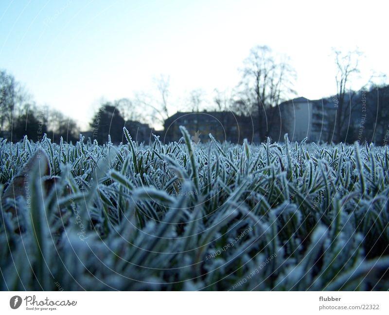one morning Grass Meadow Dew Winter Cold Frozen Near Hoar frost Morning Blue Frost