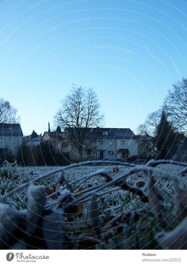 one morning II Grass Meadow Dew Winter Cold Frozen Near Hoar frost Morning Blue Frost