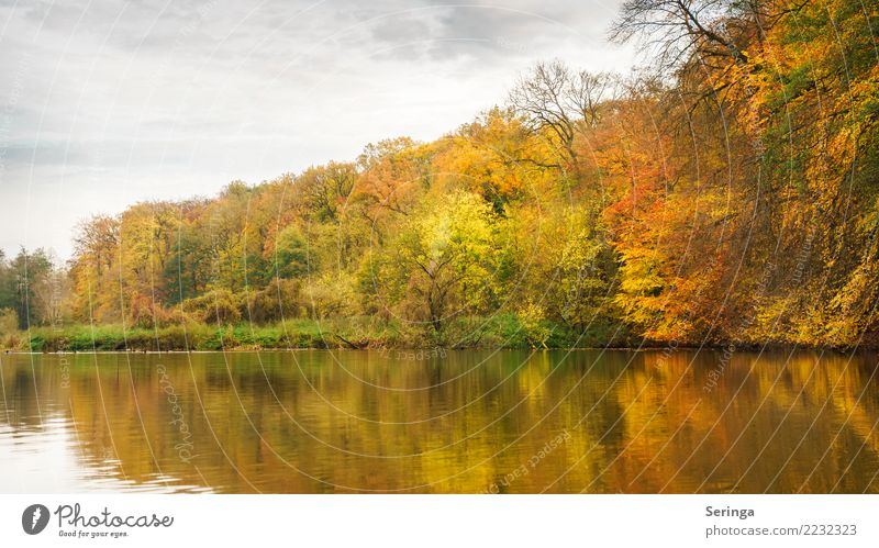 Golden Autumn Environment Nature Landscape Plant Animal Water Sky Clouds Tree Bushes Leaf Park Forest Pond Lake Discover To enjoy Looking Hiking Moody Beautiful