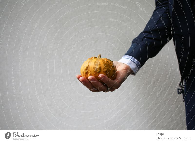 Human being Hand Natural Small Food Orange Nutrition Fresh Arm To hold on Vegetable Hallowe'en Pumpkin Thanksgiving