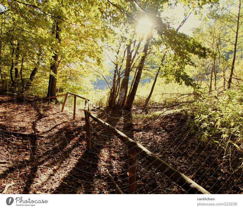 a bissle autumn warmth Environment Nature Landscape Autumn Tree Forest Brown Yellow Gold Beech wood Handrail Lanes & trails Footpath Promenade Colour photo