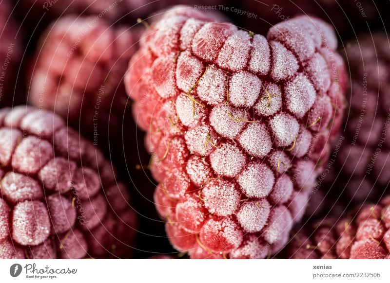 Frozen red raspberries Food Fruit Raspberry Organic produce Vegetarian diet Freeze Healthy Cold Sweet Red Hoar frost Ice crystal Rubus idaneus aggregate fruit