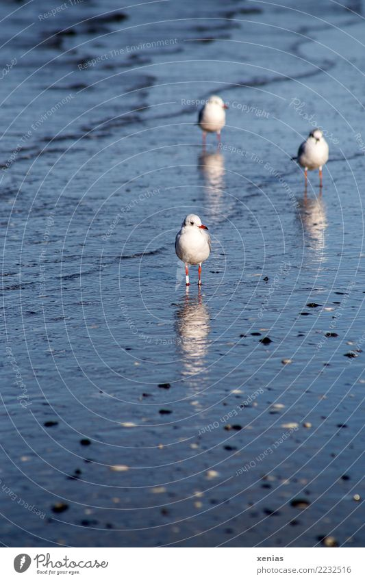Blue Water White Ocean Animal Calm Beach Coast Bird Waves Wild animal Group of animals Observe Curiosity Baltic Sea Seagull