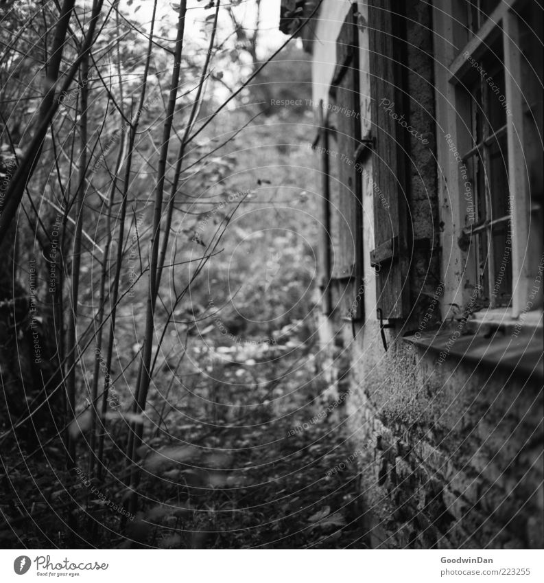 Nature Old House (Residential Structure) Loneliness Cold Wall (building) Emotions Sadness Wall (barrier) Moody Dirty Environment Facade Gloomy Bushes Broken