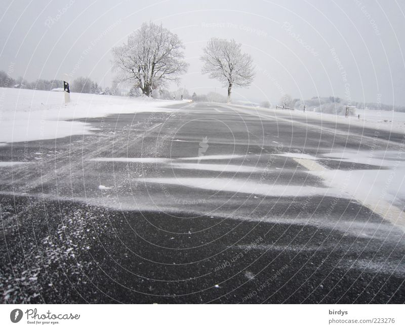blow snow Landscape Winter Weather Bad weather Wind Gale Ice Frost Snow Street Country road Exceptional Apocalyptic sentiment Cold Snowstorm Asphalt Smoothness