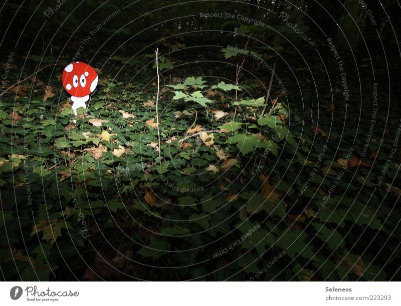 Nature Plant Leaf Eyes Forest Dark Environment Landscape Discover Whimsical Idea Mushroom False Ivy Woodground
