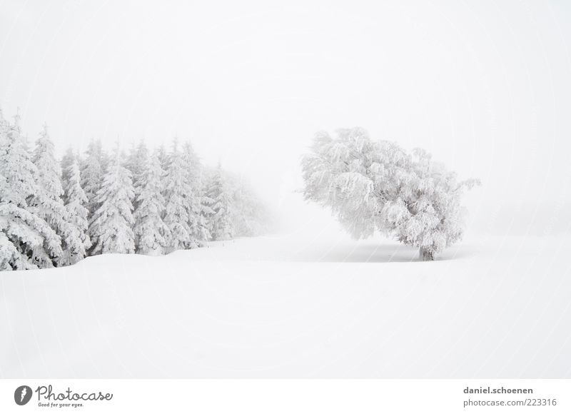 Nature White Tree Vacation & Travel Winter Forest Snow Mountain Environment Landscape Bright Ice Wind Fog Climate Frost