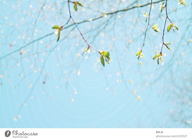 Sky Nature Tree Green Blue Plant Summer Leaf Spring Environment Weather Fresh Branch Blossoming Fragrance Bud