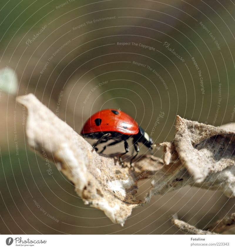 Nature Plant Red Leaf Black Animal Environment Legs Bright Small Natural Wild animal Near Shriveled Beetle Crawl