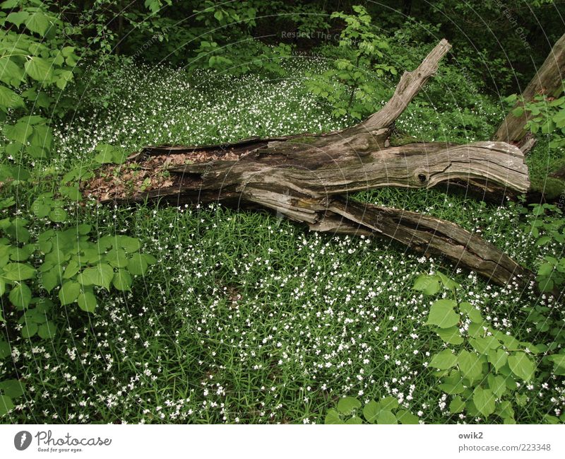 woodland Environment Nature Plant Spring Tree Flower Grass Bushes Leaf Blossom Forest Wood Blossoming Lie To dry up Growth Green White Calm Death Idyll Decline